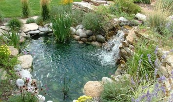 Castle Rock Pond Picture