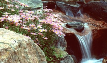 Castle Rock Pond and Waterfall Picture