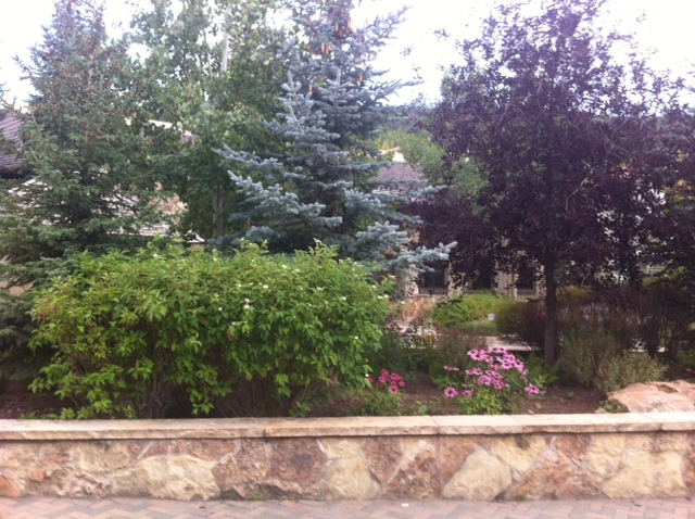 Castle Rock Landscaping Picture